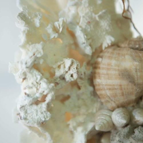 Coral de la Toscana  sobre peana Florentina  sXVIII. N.2
