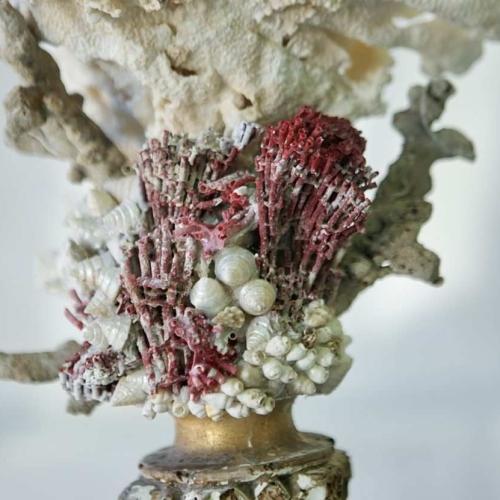 Coral de la Toscana  sobre peana Florentina sXVIII