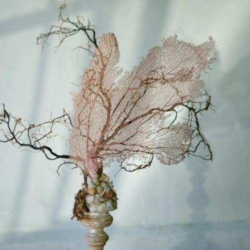 Gorgonia italiana sobre peana de madera del S.XVIII /N3