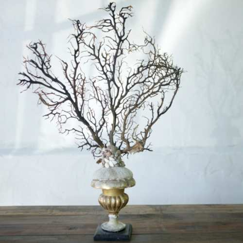 Gorgonia italiana sobre peana de coral   Florentina sXVIII
