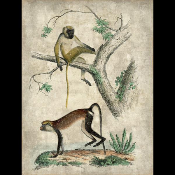 Mural Monos Árbol.