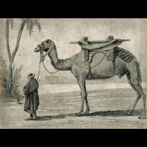 Mural Guía con camello.