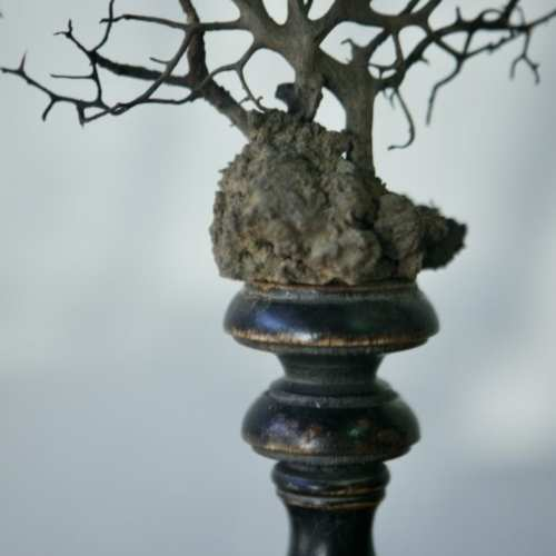 Gorgonia italiana sobre peana Florentina sXIX