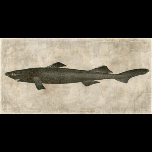 Mural Fish.